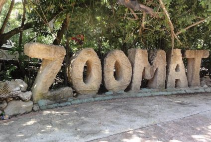 ZooMAT está de vuelta