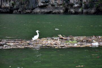 Tapones saturaron de basura al Cañón del Sumidero