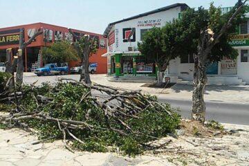 Multas de hasta 20 mil pesos por derribar árboles en Tuxtla