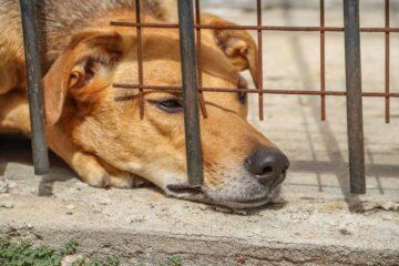 Dos años de prisión y multas de más de 13 mil pesos a quien torture a un animal