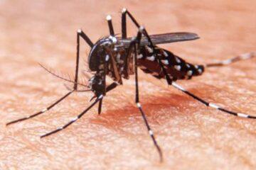 Chiapas está en temporada de dengue, alerta el IMSS